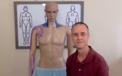 Muscles that can effect your posture, and cause pain in the shoulders, neck and arms. The Scalene Muscles